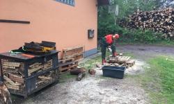 Holz (5)